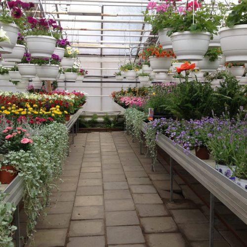 Växthusbilder 150527 005